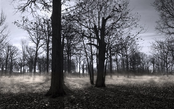 Wallpaper Autumn, trees, fog, black and white picture