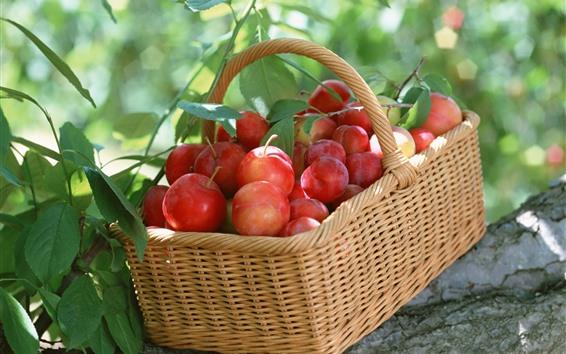 Обои Корзина, красные сливы, свежие, урожай