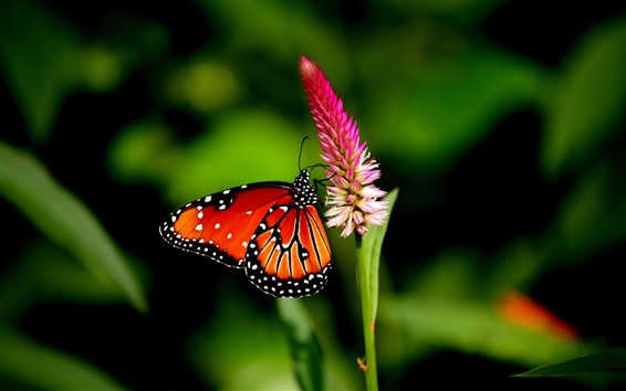 Wallpaper Butterfly, pink flower, green background