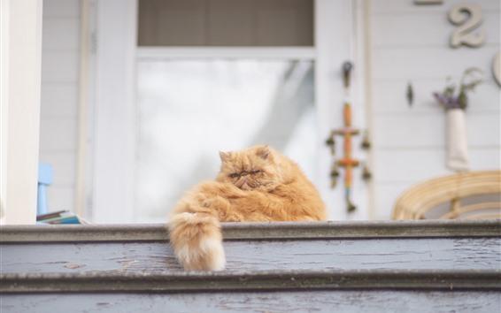 Fond d'écran Repose-chat, queue, échelle