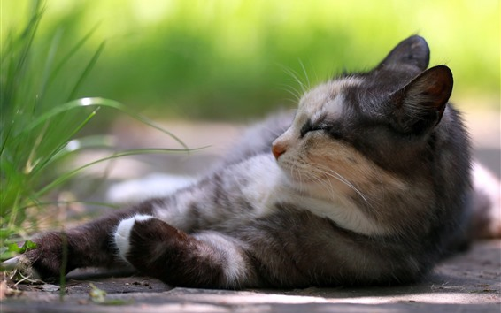 Wallpaper Cat sleeping, green grass, hazy