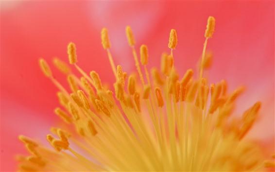 Papéis de Parede Fotografia macro de estame de flor