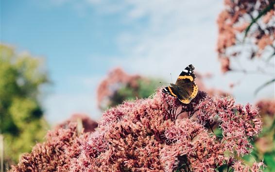 壁紙 花、蝶、かすんでいる