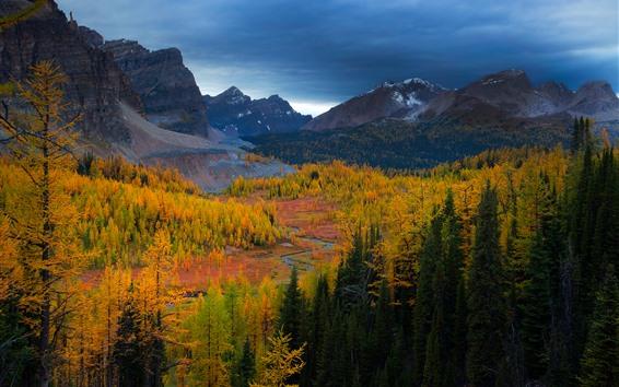 Fond d'écran Forêt, arbres, montagnes, automne, crépuscule, paysage naturel