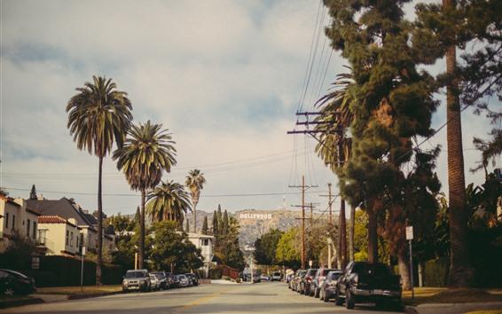 Wallpaper Hollywood, road, trees, cars, city, USA