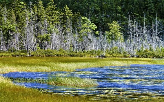 Wallpaper Lake, trees, grass, nature scenery