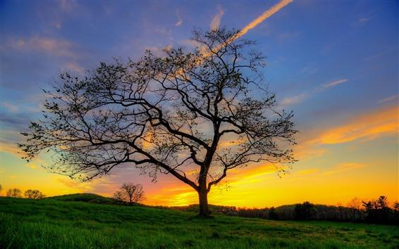 壁紙 孤独な木、草、シルエット、日没