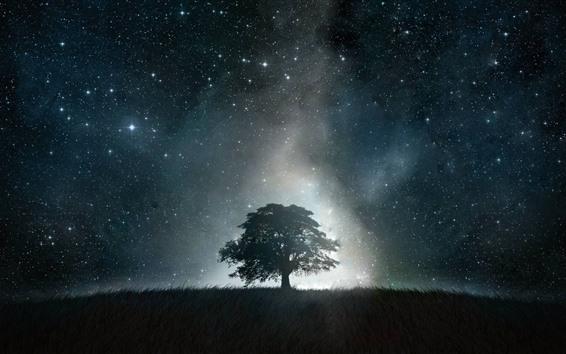 Fond d'écran Arbre solitaire, étoilé, nuit, ciel