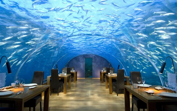 Wallpaper Maldives, cafe, underwater, fish