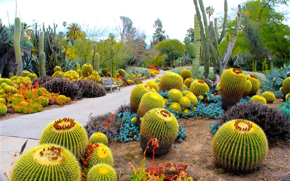 Wallpaper Many cactus, path, bench, garden