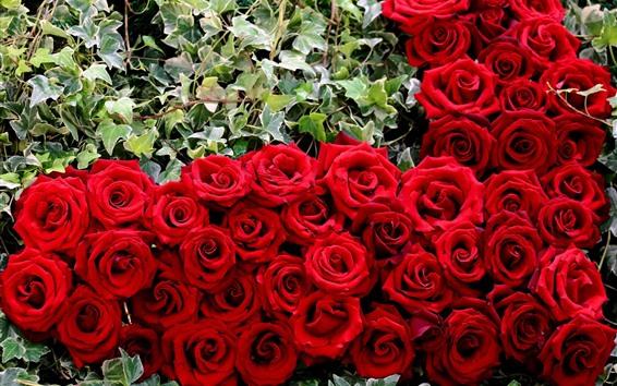 Papéis de Parede Muitas rosas vermelhas, flores, folhas verdes
