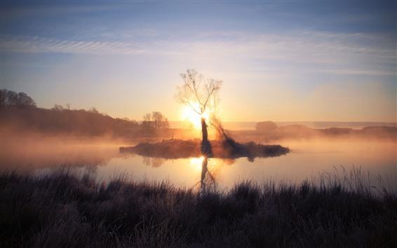 Papéis de Parede Manhã, árvore, nascer do sol, lagoa, neblina, grama