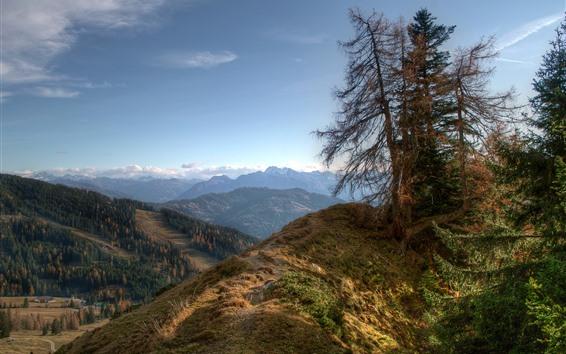 Fond d'écran Montagnes, sommet, arbres, nature
