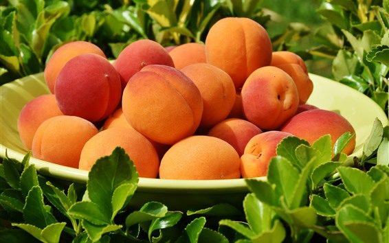 Wallpaper One plate of apricots, peaches, green leaves, fruit