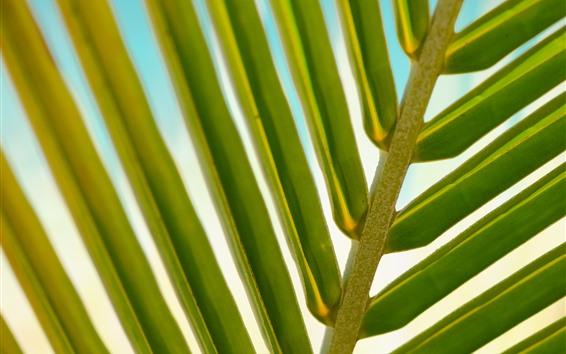 Wallpaper Palm leaf macro photography, green, stem
