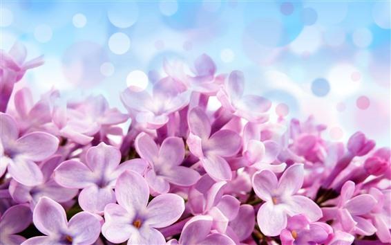 壁紙 ピンクのライラックの花のクローズアップ、花びら、明るい円