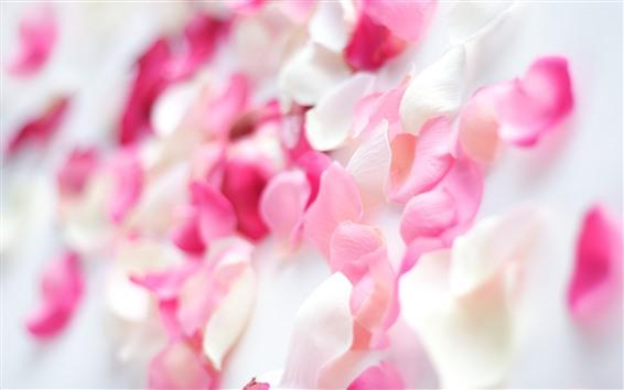 Wallpaper Pink rose petals, hazy, romantic