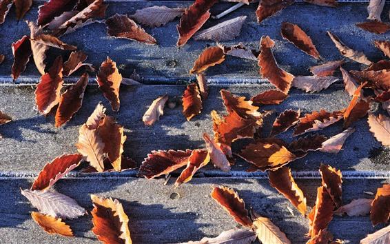 壁紙 赤い葉、霜、木の板、秋