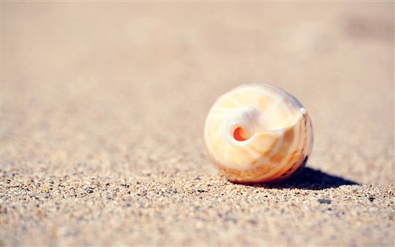 Fond d'écran Coquille, sable, nature morte