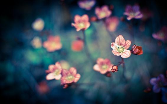 壁紙 いくつかの小さなピンクの花、かすんでいる