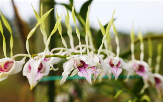 壁紙 特別な胡蝶蘭の花