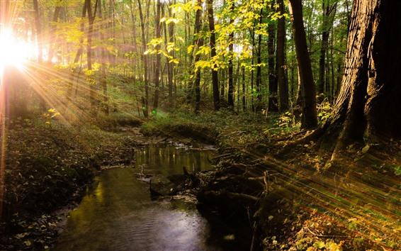 Fond d'écran Été, arbres, rayons de soleil, ruisseau, forêt