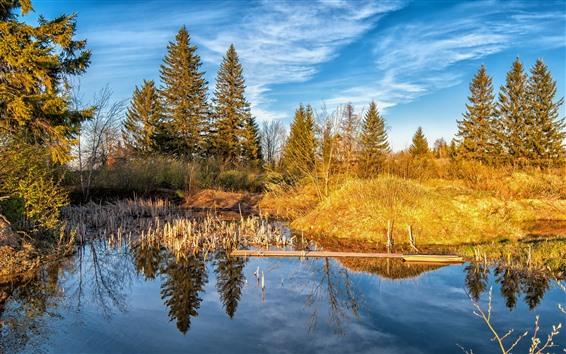 壁紙 木、草、黄色、池、青い空、秋