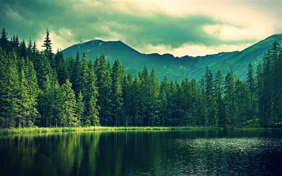 Wallpaper Trees, mountain, lake, green, dusk