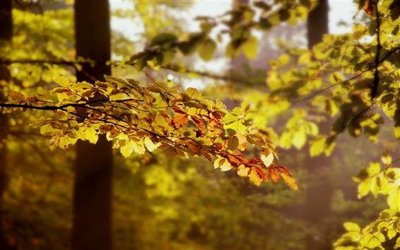 Fondos de pantalla Árboles, hojas amarillas, ramitas, sol, otoño