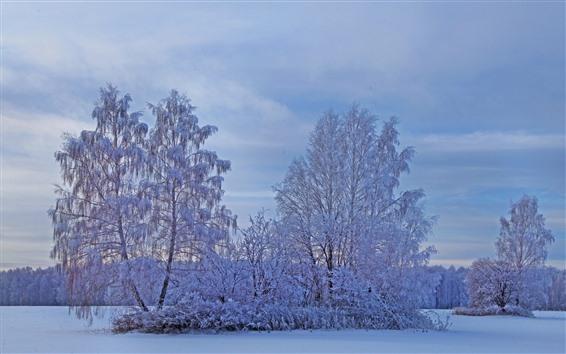 배경 화면 하얀 눈, 나무, 겨울, 황혼