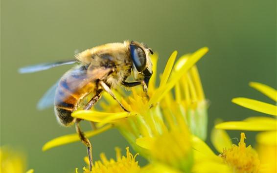 배경 화면 노란 꽃, 벌, 곤충, 흐릿한