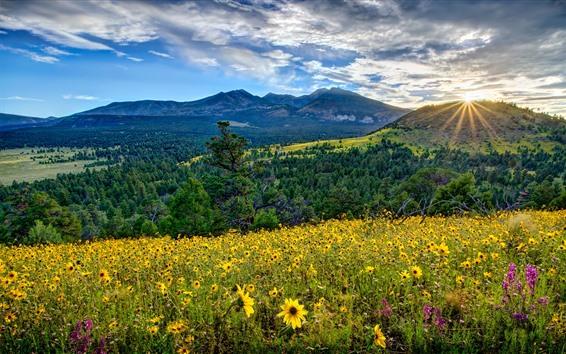 Fond d'écran Arizona, vallée, montagnes, fleurs, lever du soleil, USA