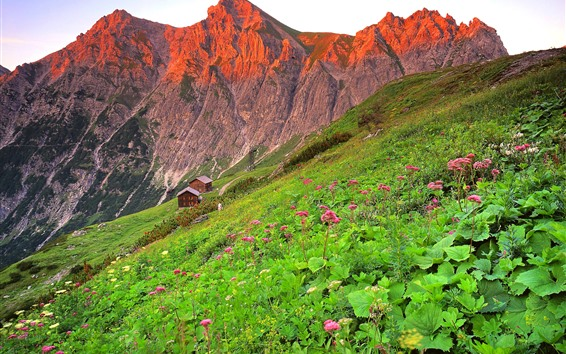 Wallpaper Austria, houses, mountains, slope, pink flowers