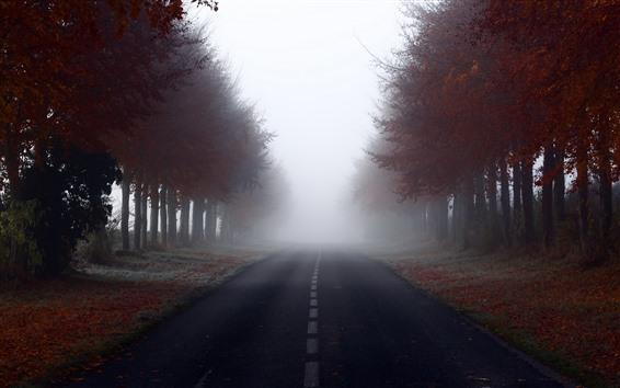 Papéis de Parede Outono, árvores, folhas vermelhas, estrada, nevoeiro, manhã