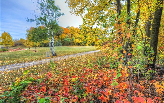 Wallpaper Beautiful autumn scenery, trees, yellow and red leaves, path