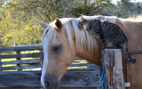 Обои Лучшие друзья, кошка и лошадь