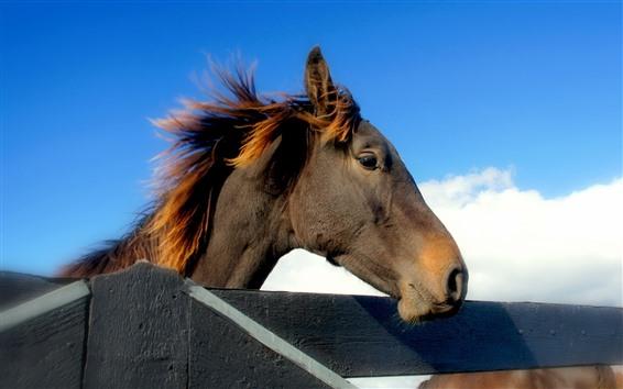 Обои Коричневая лошадь, голова, забор, голубое небо