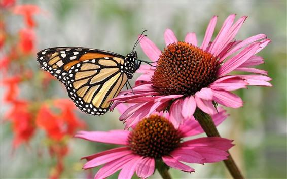 壁紙 蝶とピンクの花、昆虫