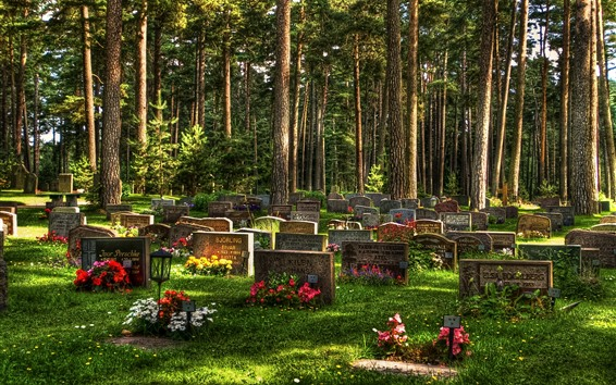 Wallpaper Cemetery, trees