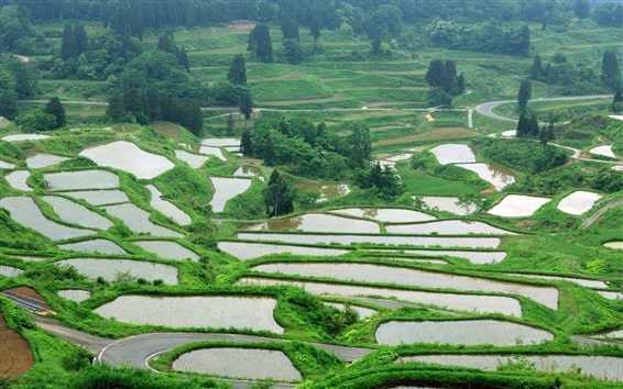 Papéis de Parede Campo, campos de arroz, água, árvores
