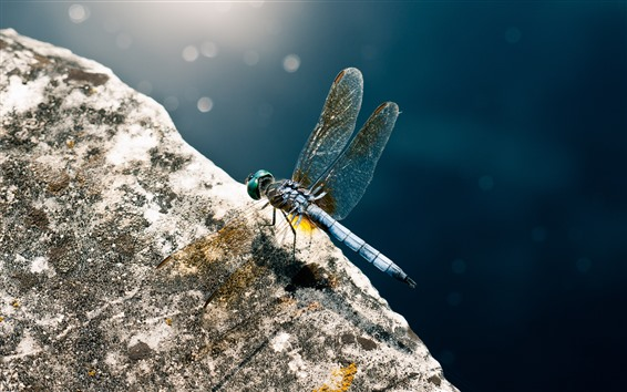 Fondos de pantalla Primer plano de libélula, alas, piedra, sol