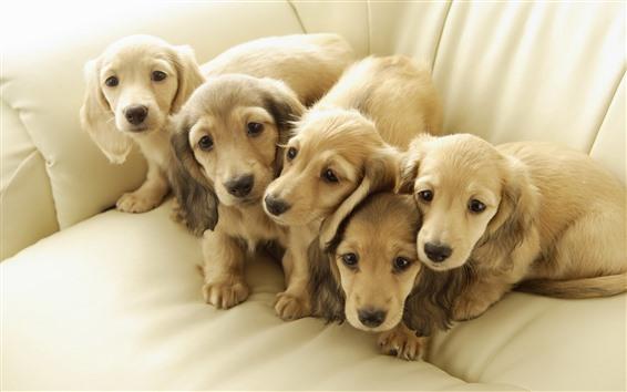 Papéis de Parede Cinco cachorros no sofá