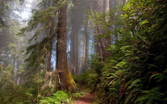 Wallpaper Forest, trees, fog, light rays