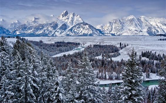 Обои Национальный парк Гранд-Тетон, деревья, снег, горы