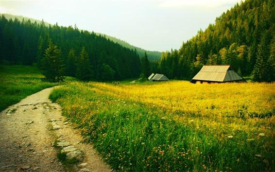 Fond d'écran Herbe, champs, maison, chemin, arbres, campagne
