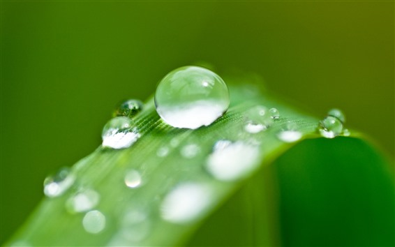 배경 화면 푸른 잔디 잎, 물방울, 이슬