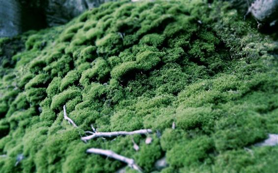 Обои Зеленая трава, мох, мутный