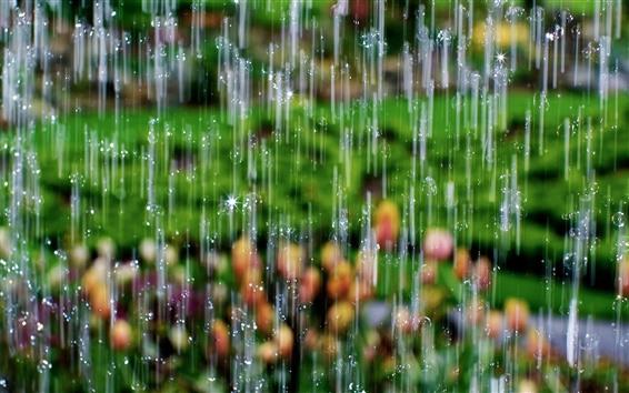 Papéis de Parede Chuva forte, gotas de água, sol
