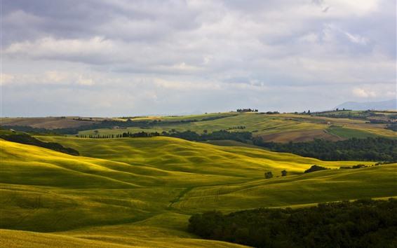 Papéis de Parede Itália, Montalcino, Toscana, campos verdes, colinas, árvores, campo
