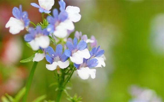 Papéis de Parede Pequenas flores, pétalas azuis e brancas